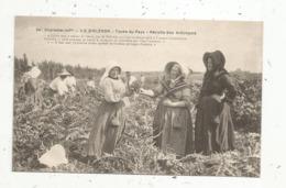 Cp , Agriculture ,ILE D'OLERON ,types Du Pays ,récolte Des Artichauts ,  Vierge, Ed. Braun - Landbouw