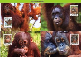 Nfd02mb FAUNA AAP APEN URANGUTAN MONKEYS MAMMALS APES AFFEN SINGES PAPUA NEW GUINEA 2013 MAX - Affen