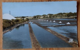 17 : Les Portes - Ile De Ré - Les Marais Salants - CPSM Format CPA Colorisée - (n°16131) - Ile De Ré