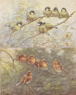 Tucks The Robin Redbreast Tits Birds 2x Antique Bird Postcard S - Birds