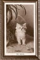 """The Seraph Cat"" Tuck Kittendom Series PC # 5305 - Gatos"