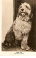 """""""Owd Bob. The Famous Film Dog""""  Tuck Real Photograph PC # 3649 - Chiens"""