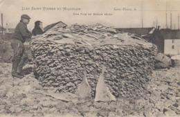 Cpa Miquelon Envoyée A Lamusse Granville Peche Morue  Belle Pile De Morues Seches  Grande Peche   St Pierre Terre Neuve - Saint-Pierre-et-Miquelon