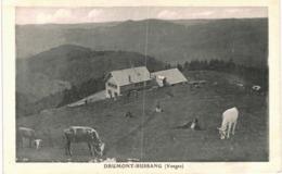 Drumont Bussang - Ferme - Vache - Bussang