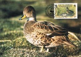 33891. Tarjeta Maxima SOUTH GEORGIA And Is. Sandwich 1992. Pato Georgia, Duck - Georgias Del Sur (Islas)