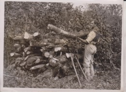 MODERN HERMIT F BLAKE MICHELDEVER WOODS CHOPPED WOOD  UK  Xylology, Forestry 20*15CM Fonds Victor FORBIN 1864-1947 - Professions