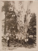 SEE BACK   Xylology, Forestry 18*13CM Fonds Victor FORBIN 1864-1947 - Profesiones