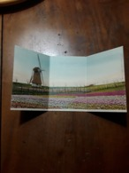 Cartolina Postale 1902, Tulpenveld Te Hillegom - Pays-Bas