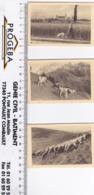 3 Calendrier De 1953 Petits Formats - Calendriers