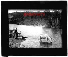 Plaque De Verre - Un Boeuf Buvant Dans La Rivière Et Sa Gardienne, à Identifier - Taille 85 X 100 Mlls - Plaques De Verre
