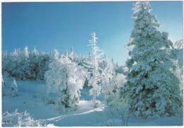 Winter Scene - Scene D'hiver - Canada - Canada