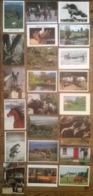 Lot De 32 Cartes Postales / Animaux / Cheval CHEVAUX - Chevaux