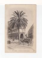 Alger. Le Palmier De La Rue De La Liberté. Avec Omnibus à Chevaux. (3266x) - Alger