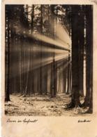 Sonne Im Laubwald 1941 Feldpost - Fotografie