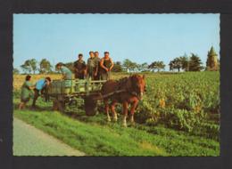 CPSM Gf.  ATTELAGE NANTAIS (44) Dans Les Vignes - Vignes