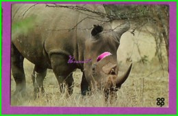 Image Chromo Chocolat COOP Antoine Reille Raconte Animaux WWF N° 31 Rhinocéros Blanc - Schokolade