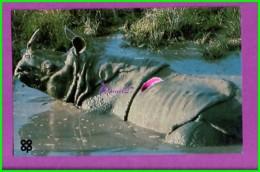 Image Chromo Chocolat COOP Antoine Reille Raconte Animaux WWF N° 33 Rhinocéros Des Indes - Cioccolato