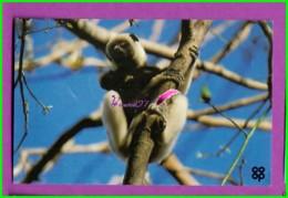 Image Chromo Chocolat COOP Antoine Reille Raconte Animaux WWF N° 58 Propithèque De Verreaux  Singe - Schokolade