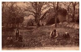 Saint-Martin-Vésubie - La Récolte Des Chataîgnes - Saint-Martin-Vésubie