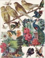 Découpis   Lot De 10    Oiseaux   (3 Grands Format)       19 X 11.5 Cm Le Plus Grand - Découpis