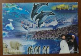 Beluga Whale,polar Beer,penguin,dolphin,shark,fish,CN 12 Dalian Ocean World Aquarium Advertising Pre-stamped Card - Dolphins