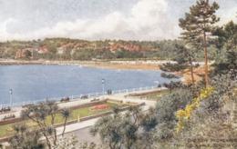Postcard The New Promenade From Rock Walk Torquay Devon By Salmon My Ref  B13696 - Torquay
