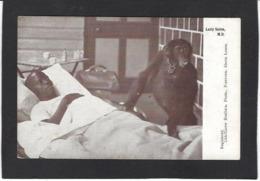 CPA Sierra Léone  Non Circulé Singe Monkey - Sierra Leone