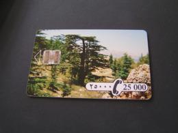 LEBANON 25.000 L CEDAR TREE LANDSCAPE CHIP READ DESCRIPTION !! - Liban