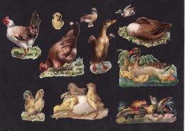 Découpis   Lot De 18    Poules, Canards, Coqs       9.8 X 8.5 Cm Le Plus Grand - Découpis