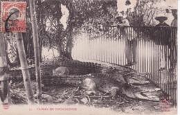 INDOCHINE(ZOO) CAIMAN - Viêt-Nam