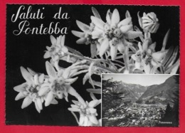 CARTOLINA VG ITALIA - Saluti Da PONTEBBA - 10 X 15 - 1960 MESS TARVISIO VENEZIA - Saluti Da.../ Gruss Aus...