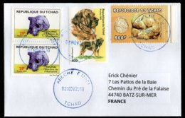 TCHAD Enveloppe Cover Oblitération Abéché 08 11 2018 Chien Dog  Toumaï Champignon Mushroom - Tchad (1960-...)