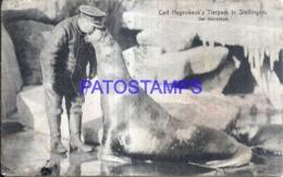119688 GERMANY STELLINGEN CARL HAGENBECK'S ANIMAL PARK SEA WOLF POSTAL POSTCARD - Germania