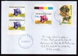 TCHAD Enveloppe Cover Oblitération Abéché 08 11 2018 Chien Dog Toumaï - Tchad (1960-...)