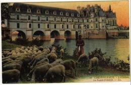 CHATEAU DE CHENONCEAUX (37) 1916  MOUTONS ET BERGERE, EN COULEURS PHOTOS R/V - Chenonceaux
