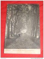 WEMMEL  - Drève Du Parc Du Château De Limburg- Stirum   -   1911 - Wemmel