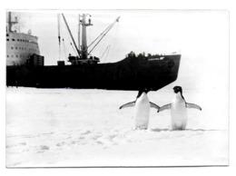 Antarctique. Russie. URSS. Station Molodejnaya. Rare. 04.04.91 36 SAE Brise Glace Navarin & Photo - Briefmarken