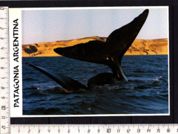 CP Argentine Patagonie Patagonia Baleine Ballena Whale France Austral Photo: Francis Pontoriero - Animaux & Faune