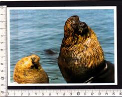 CP Argentine Patagonie Patagonia Lion De Mer, Leon Marino, Sea Lions Photo: Francis Pontoriero - Animaux & Faune
