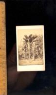Photographie CDV : Le Jardin Du Bal Mabille PAris  C.1870 / Atelier Photographic Company HERVE & DEBITTE PARIS - Plaatsen