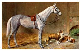 Dog , Jumper  Horse With Collies - Dogs