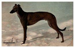 Dog  , Greyhound - Dogs