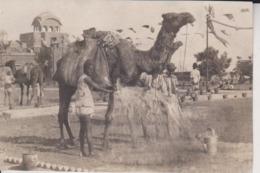 CHAMEAUX 10*8CM Fonds Victor FORBIN 1864-1947 - Africa