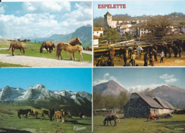 Chevaux -- Lot De 49 Cartes - Caballos