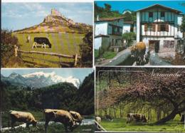 Vaches -- Lot De 53 Cartes - Vaches
