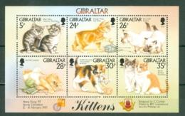 Gibraltar: 1997   Kittens    M/S   MNH - Gibilterra