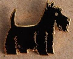 CHIEN NOIR - BLACK DOG - SCHWARZ HUND - WEST HIGHLAND BLACK TERRIER  -      (22) - Animales