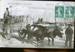SAINT PIERRE ET MIQUELON ATTELAGE - Saint-Pierre-et-Miquelon
