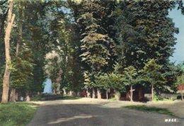 2019 - PAS DE CALAIS - 62 - SAINT OMER - Les Jardins - CPSM PF Couleur - Saint Omer