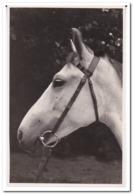 Horse - Paarden